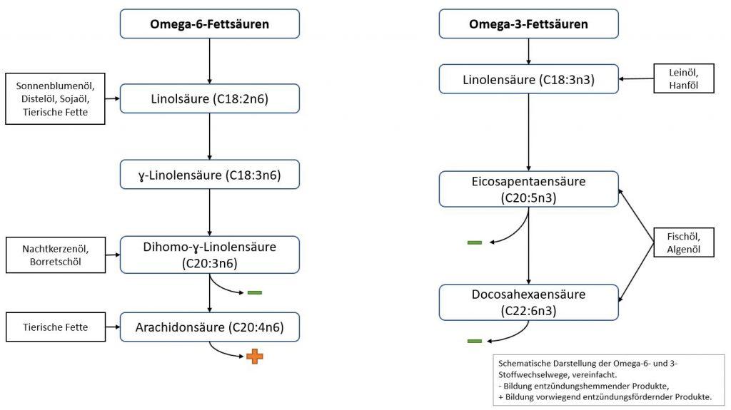Stoffwechselwege von Omega-3 und Omega-6-Fettsäuren