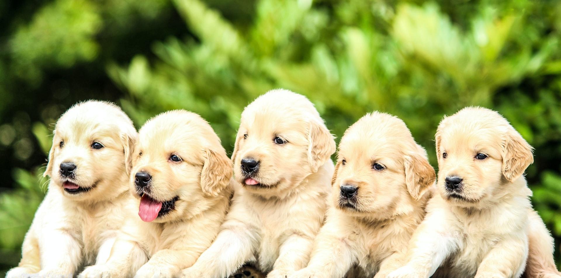 Ernährung von Welpen und Junghunden