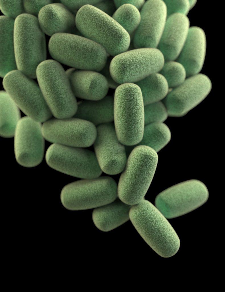 gut bacteria microbiom